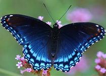Pillangók, keselyűk, kerítések és terpeszek kiépítése